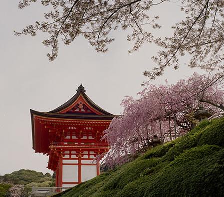 Cherry Blossom - Kiyomizudera
