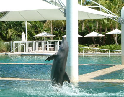 A scene in Dolphin World