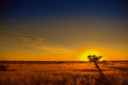 Kalahari Desert - South Africa