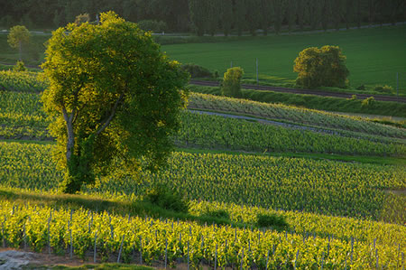 Champagne Tours in France - Our Favourites