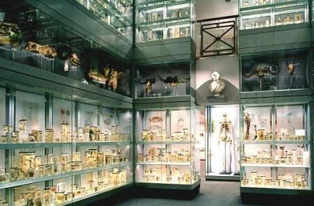 London - Hunterian Museum