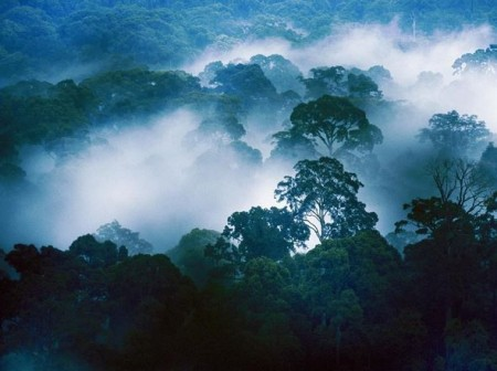 Forest Danum