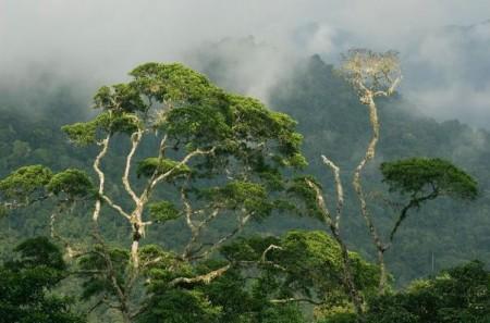 Forest Darien