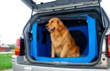Tips for Taking Your Dog on a Travel