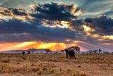 Tanzania – One of the Most Beautiful Parts of the World