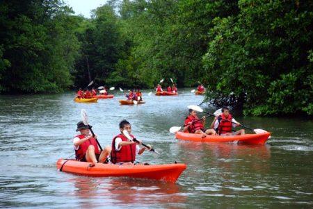 Mangrove Kayaking in Singapore