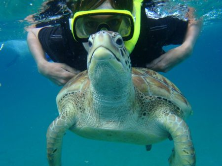 swimming-with-turtles-in-barbados