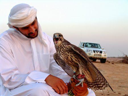 Falcon Birds of Saudi Arabia